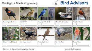 Backyard Birds Identification Worksheet Wyoming Page 1