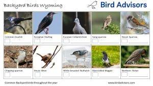 Backyard Birds Identification Worksheet Wyoming Page 2