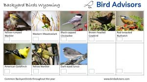 Backyard Birds Identification Worksheet Wyoming Page 3