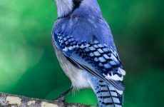 Top 28 Backyard Birds in Ontario (Free Picture ID Printable)