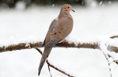 Top 20 Backyard Birds in Connecticut (Free Picture ID Printable)