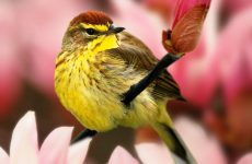 Top 28 Backyard Birds in Florida (Free Picture ID Printable)