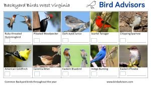 Slide Backyard Birds Identification Worksheet West Virginia Page 3