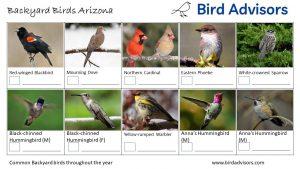 Backyard Bird Identification Worksheet Arizona page 1