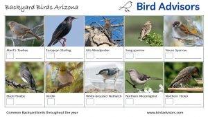 Backyard Bird Identification Worksheet Arizona page 2