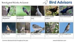 Backyard Bird Identification Worksheet Arizona page 3