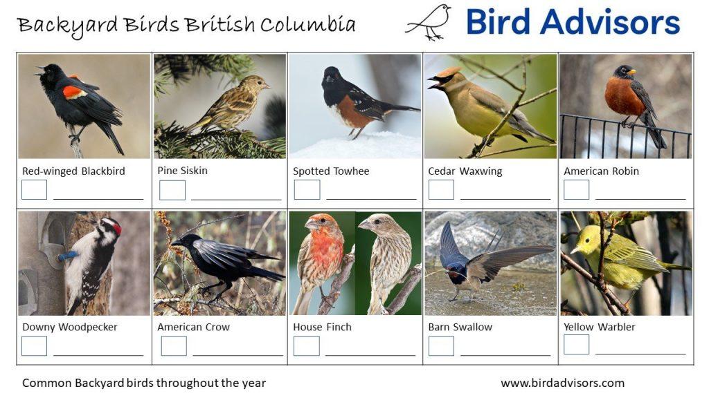 Backyard Birds Identification Worksheet British Columbia Page 1