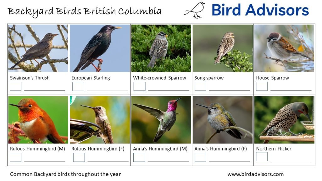 Backyard Birds Identification Worksheet British Columbia Page 2