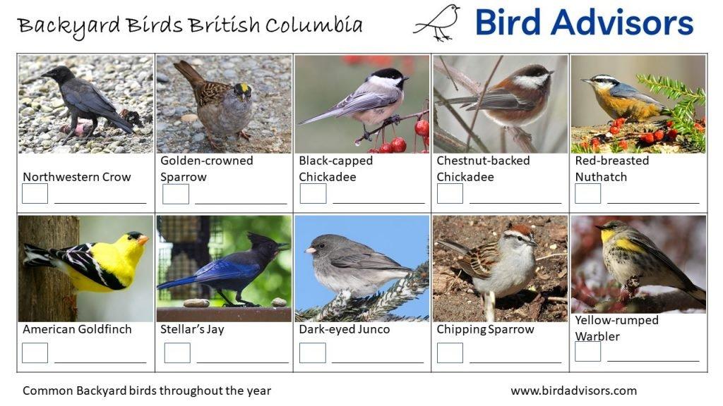 Backyard Birds Identification Worksheet British Columbia Page 3