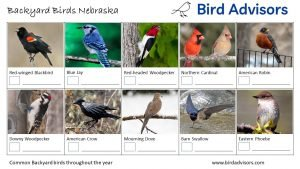 Backyard Birds Identification Worksheet Nebraska Page 1