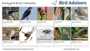 Backyard Birds Identification Worksheet Nebraska Page 2