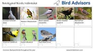 Backyard Birds Identification Worksheet Nebraska Page 3