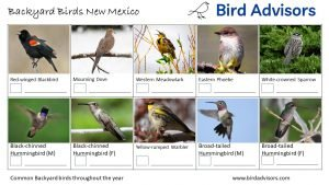Backyard Birds Identification Worksheet New Mexico Page 1