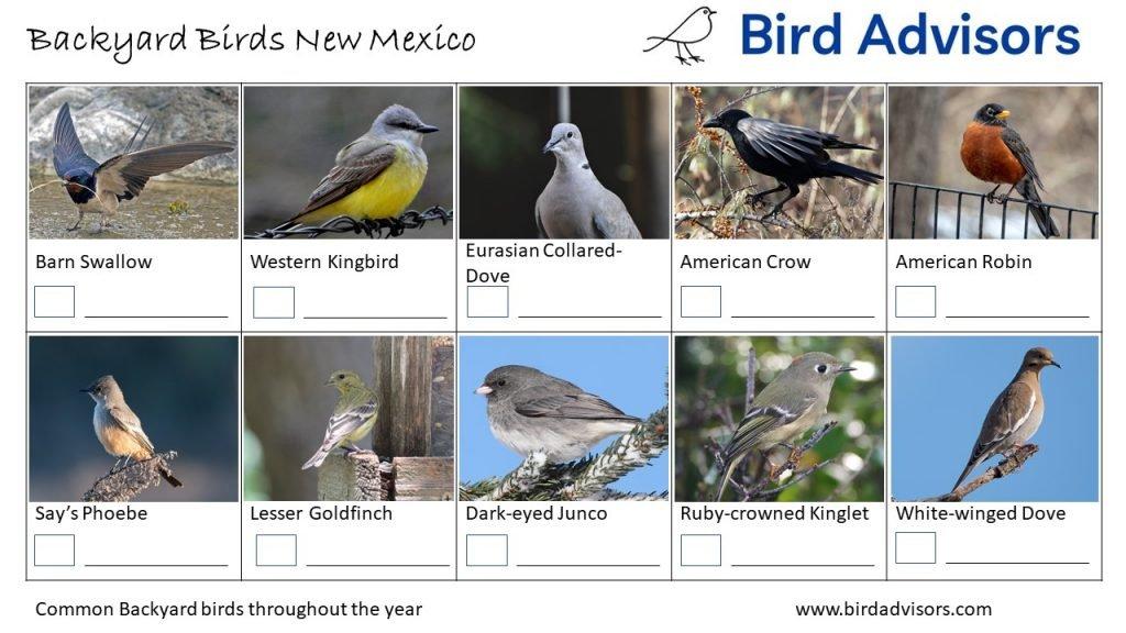 Backyard Birds Identification Worksheet New Mexico Page 3