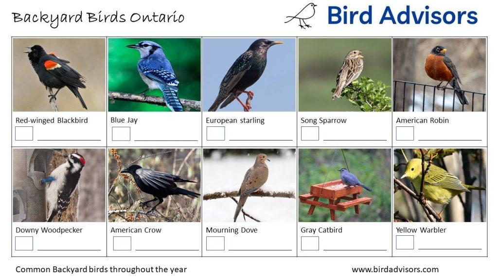 Backyard Birds Identification Worksheet Ontario, Canada Page 1