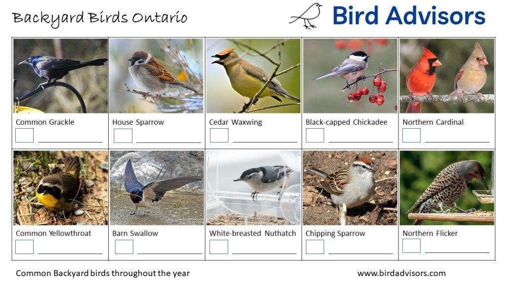 Backyard Birds Identification Worksheet Ontario, Canada Page 2