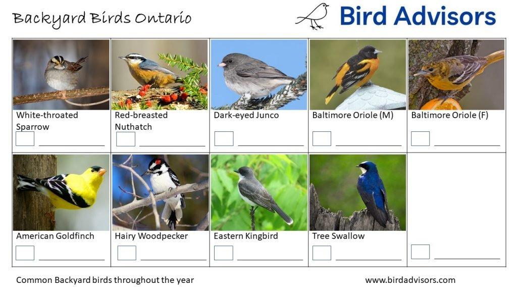 Backyard Birds Identification Worksheet Ontario, Canada Page 3