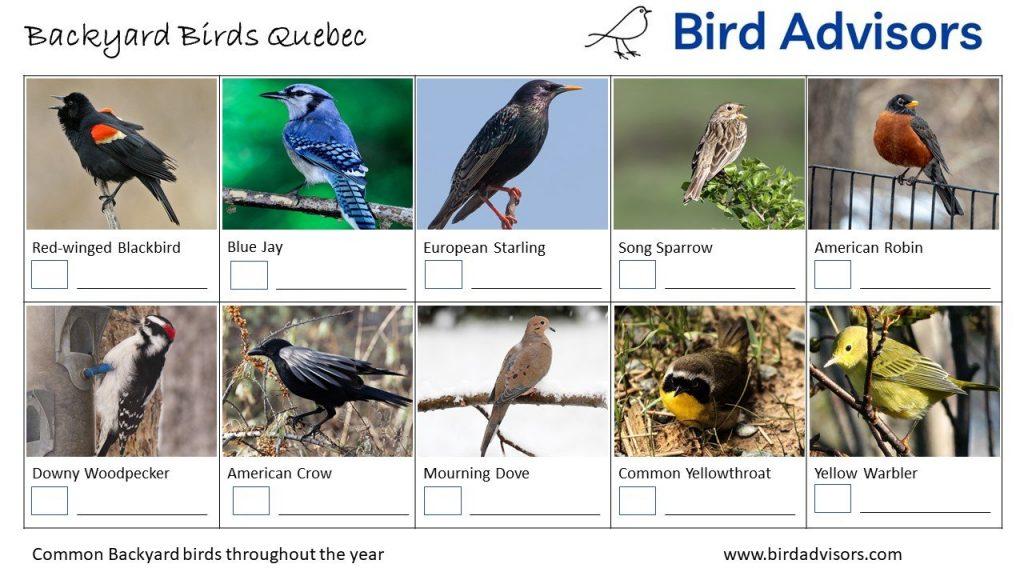 Backyard Birds Identification Worksheet Quebec Page 1