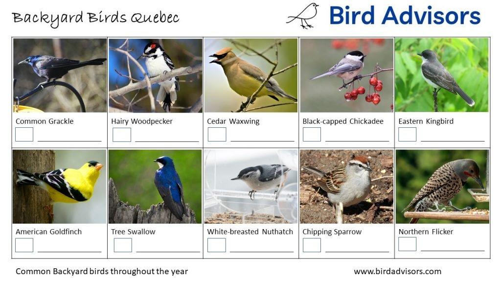 Backyard Birds Identification Worksheet Quebec Page 2