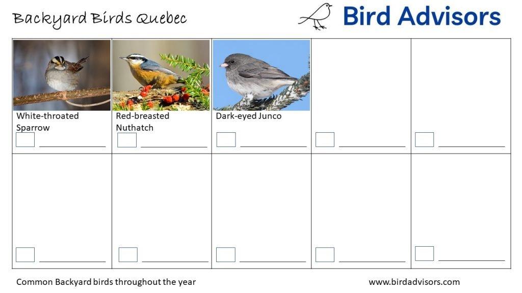Backyard Birds Identification Worksheet Quebec Page 3