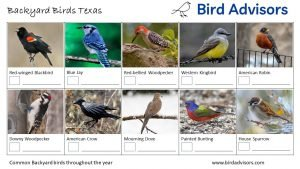 Backyard Birds Identification Worksheet Texas Page 1