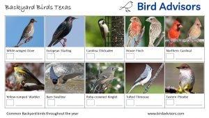 Backyard Birds Identification Worksheet Texas Page 2