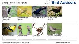 Backyard Birds Identification Worksheet Texas Page 3