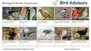 Backyard Birds Identification Worksheet