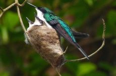 Live Hummingbird Nest and Feeder Cams 2021
