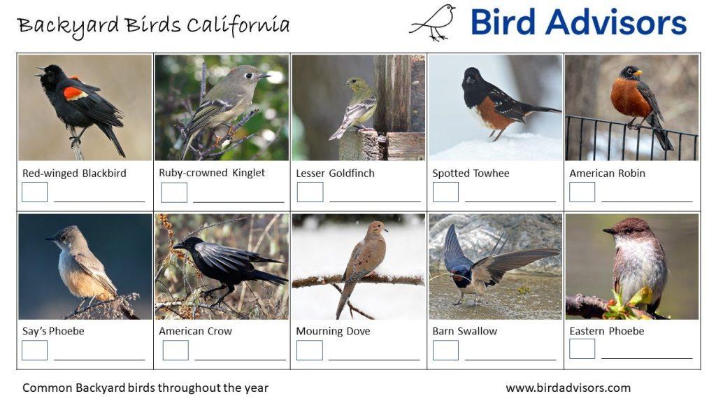 California Bird identification sheet 1 free printable