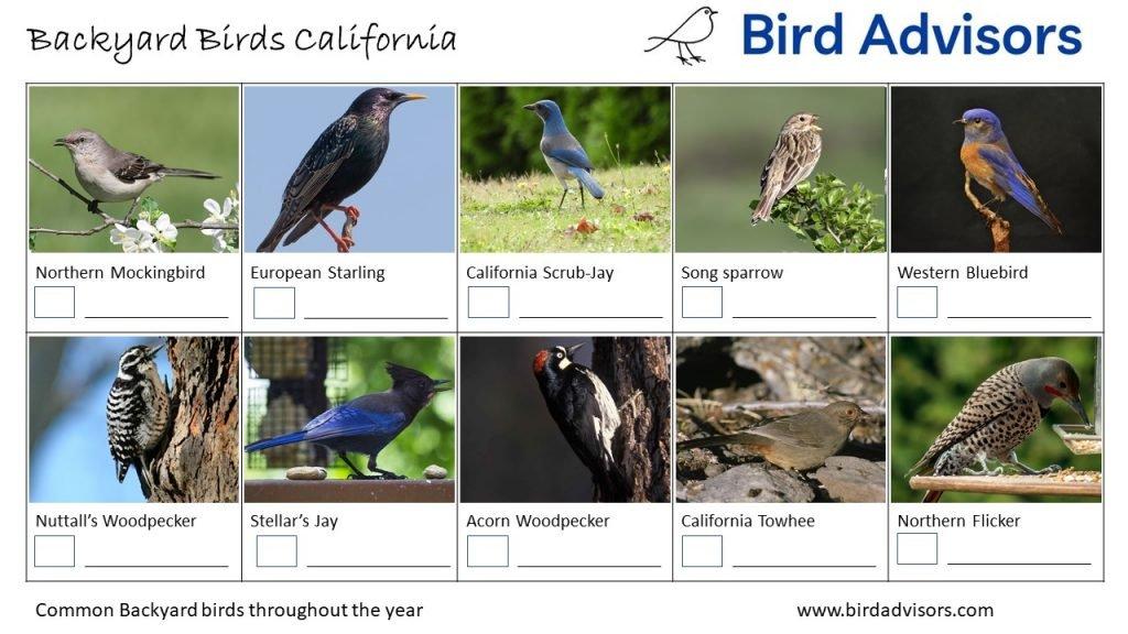 California Bird identification sheet 2 free printable