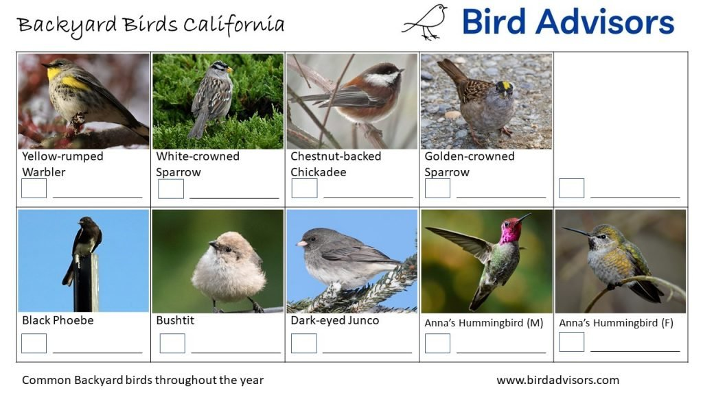 California Bird identification sheet 3 free printable