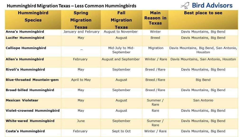 Hummingbird Migration in Texas - less common hummingbirds in Texas