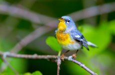 26 Small Birds in Florida