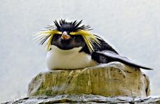 Birds With Crests You Should Check Out