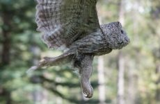 Lots of Hilarious Pictures of Owl Legs For You to Enjoy