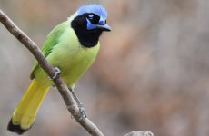 Green Birds – Picture and ID Guide