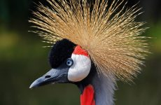 25 Fabulous Birds With Mohawks