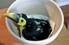 Meet The Adorable Baby Toucan